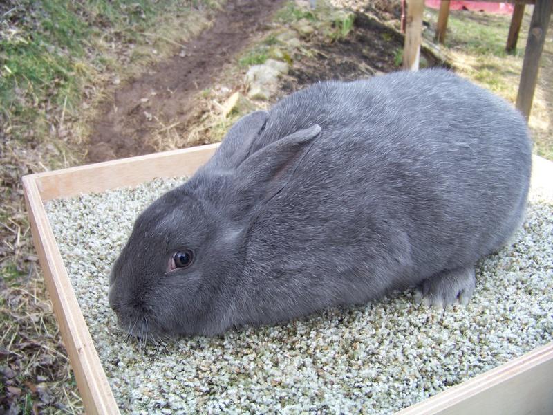 Sales Rabbit